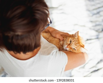 Cute ginger cat lies on woman's hands. The fluffy pet comfortably settled to sleep or to play. Cute cozy background. Morning bedtime at home.