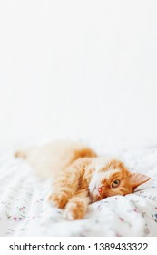 Cute ginger cat lying in bed. Fluffy pet comfortably settled to sleep. Cozy home background with funny pet. Place for text.