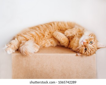 Cute ginger cat lying belly up on carton box. Fluffy pet gazing curiously.