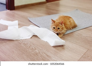 Cute ginger cat was playing with toilet paper. Fluffy pet looking scared and waiting for punishment.