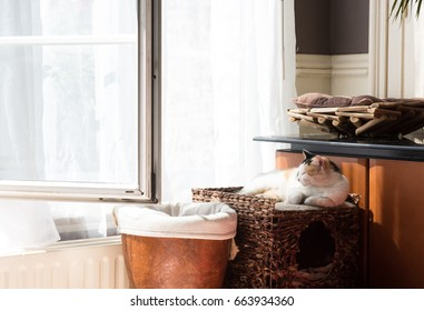 Cute ginger cat relaxing at home