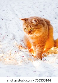 Cute ginger cat sitting in bed with shining light bulbs. Fluffy pet looks curiously. Cozy home holiday background.
