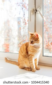 Cute ginger cat sitting on window sill. Cozy home background with domestic fluffy pet.