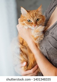 Cute ginger cat is sitting on woman's hands and staring at camera. Symbol of fluffy pet adoption.