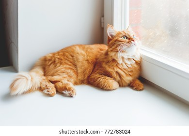 Cute ginger cat sitting on window sill and looking on falling snow. Cozy home background with domestic fluffy pet.