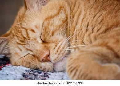 Cute ginger cat sleeping on a colored rag during day time