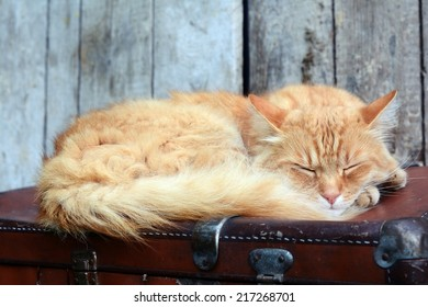 Cute ginger cat sleeping on old suitcase