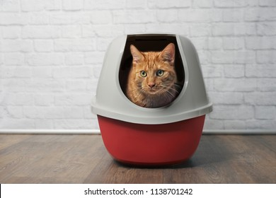 Cute ginger cat using a red, closed litter box.