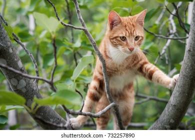Cute ginger kitten climbing in a tree