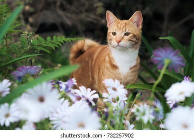 Cute ginger kitten in a garden of white flowers