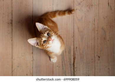 Cute ginger kitten looking up from wooden floor with window light
