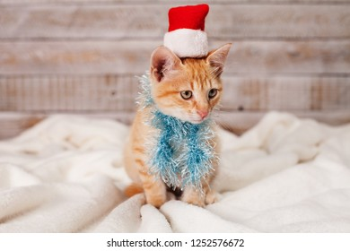 Cute ginger kitten ready for christmas - wearing a fluffy scarf and santa hat, sitting on white blanket