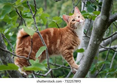Cute ginger kitten in a tree