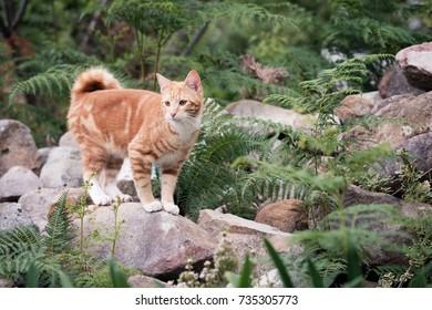 Cute ginger kitten in wild garden of rocks and ferns