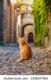 Cute ginger tabby cat kitten sitting in a picturesque ancient cobblestone alley with arches in the medieval Old Town of Rhodes, Dodecanese, Greece