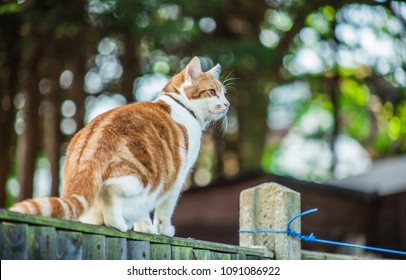 cute ginger tabby cat walking on the fence