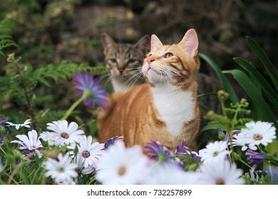 Cute ginger and tabby kittens in a flower garden