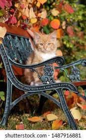 Cute ginger ginger tabby sitting on bench, with bush in prime autumn colors and colorful leaves on the ground.