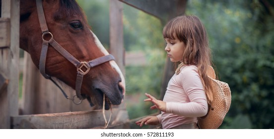 Cute girl feeding her horse in paddock