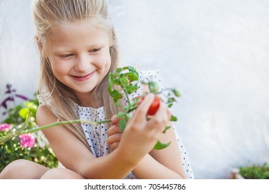 Cute girl holding tomato that grow in a pot