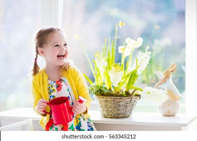 Cute girl watering first spring flowers. Easter home interior and decoration. Child taking care of plants. Kid with water can. Toddler with toy bunny. Little gardener with hyacinths and daffodils