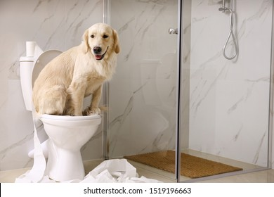 Cute Golden Labrador Retriever sitting on toilet bowl in bathroom. Space for text