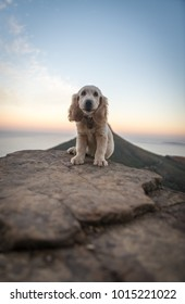 Cute golden retriever cocker spaniel puppy on mountain hiking