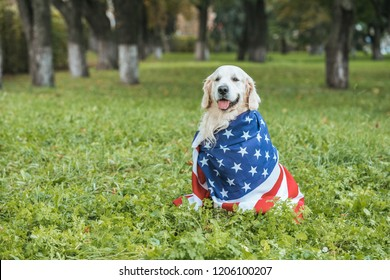 cute golden retriever dog wrapped in american flag sitting on grass in park