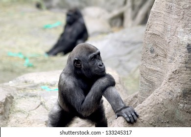 Cute gorilla baby with a thoughtful face