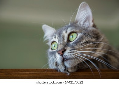 a cute gray cat at home