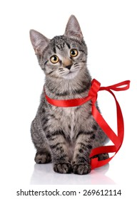 Cute gray kitten with red bow sitting on a white background