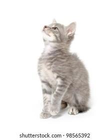 Cute gray kitten sitting on white background
