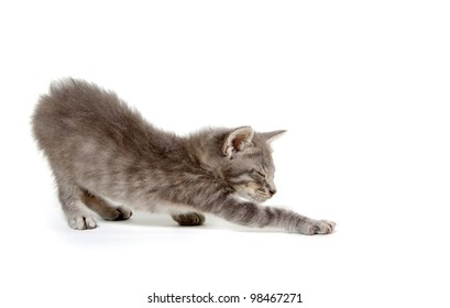 Cute gray kitten stretching on white background