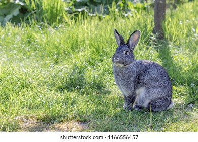 a cute, gray rabbit in a garden
