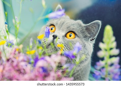 Cute gray shorthair cat and wild flowers, curious pet