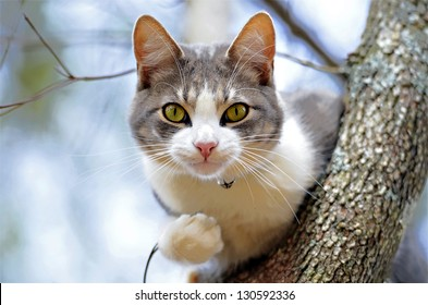 Cute gray and white cat in a tree looking for birds.