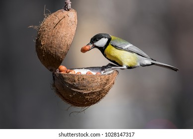 Cute  Great tit (Parus major) bird in yellow black color sitting on bird feeder