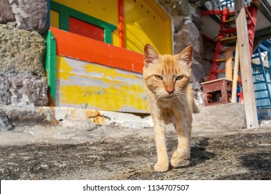 Cute greek cat
