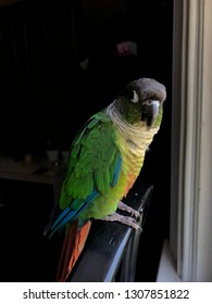 Green Cheek Bird Images, Stock Photos & Vectors | Shutterstock