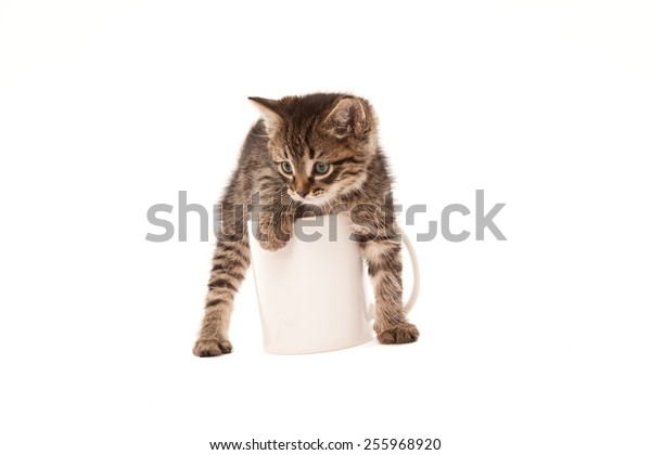 Cute green eyed kitten in white cup isolated on white