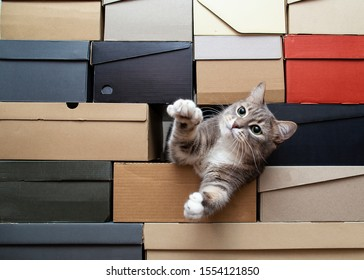 Cute green-eyed cat is sad that no one is playing with him, he crawled into a pile of folded shoe boxes, pulls paws to the man with hope and looks intently. Copy space.