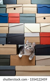 Cute green-eyed cat is sad that no one is playing with him, he crawled into a pile of folded shoe boxes and looks hopefully at the owner. Copy space.