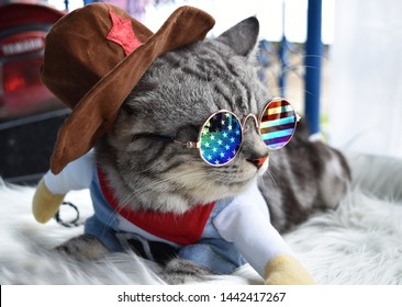 Cute grey American short hair cat with eyeglasses of united states flag and hat.
