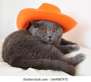 Cute grey British Shorthair cat with orange eyes is laying on a white couch and has an orange cowboy hat on.