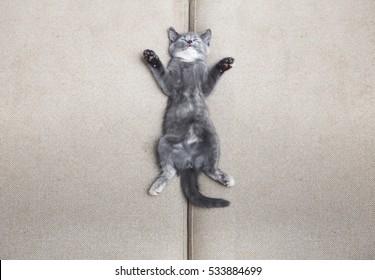 cute grey kitten sleeping on sofa at home