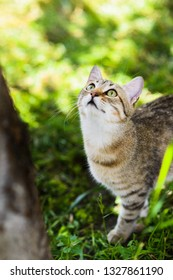Cute grey pretty cat hunting in grass chasing birds on tree