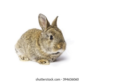 Cute grey rabbit isolated on white background