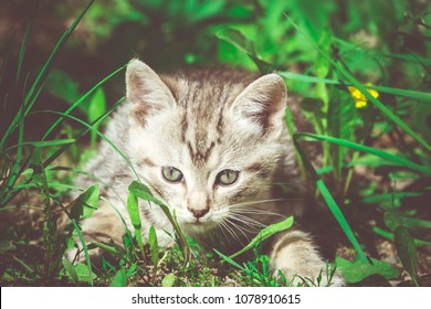 Cute grey striped kitten playing outdoor at the sunny day, vintage.
