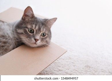 Cute grey tabby cat in cardboard box on floor at home