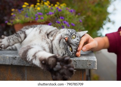 cute grey tabby cat enjoying be stroked from a girls hand